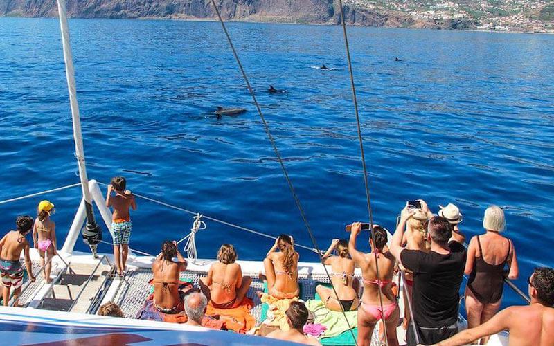 Catamaran trip with Sighting of Cetaceans