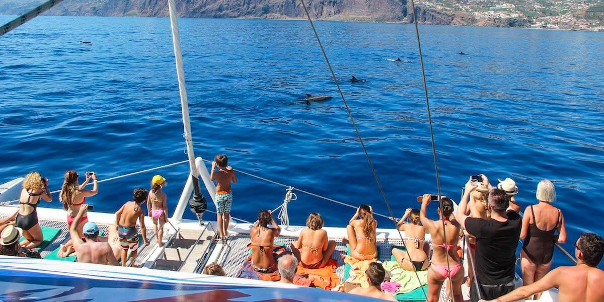 Catamaran Trip with Sightings of Cetaceans